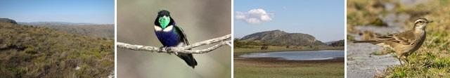 birding-serra-cipo