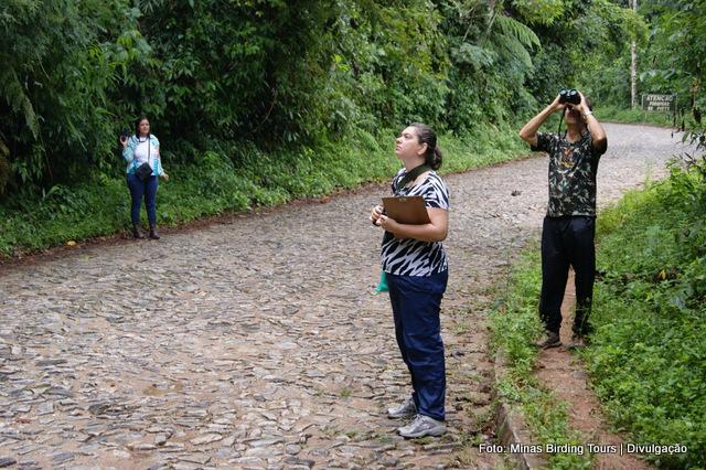 Grupo observando os bando misto que se alimentava nas copas das árvores